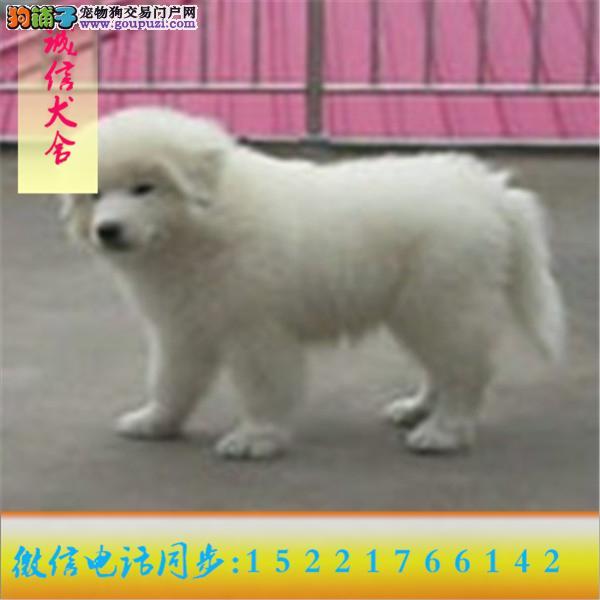 24小时服务!微信15221766142专业出售大白熊