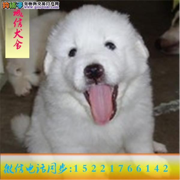 微信15221766142专业出售大白熊24小时服务!