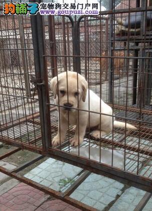 贵阳卖狗、贵阳哪里有专门卖狗的地方