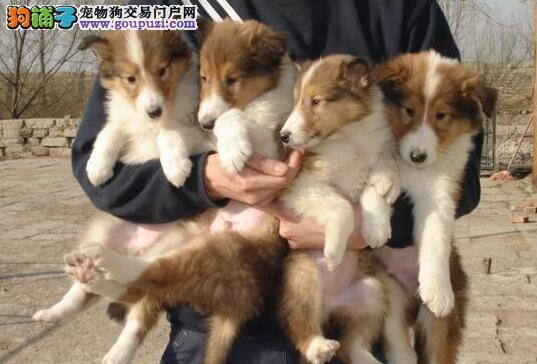 云南卖狗的那么多 那家买卖狗比较好