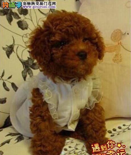 聪明伶俐 娇小可爱的玩具微小体泰迪熊宝宝
