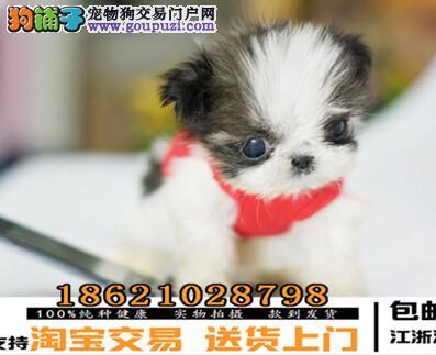 杭州精品小体西施犬 尊贵犬种,高端伴侣犬 玩赏犬