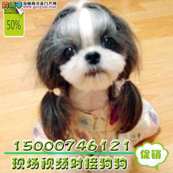 江苏可爱西施出售 健康可爱 正规犬舍 签协议质保