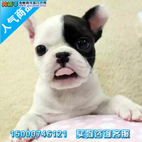 浙江出售纯种赛级法国斗牛犬 保证品质健康 颜色齐全