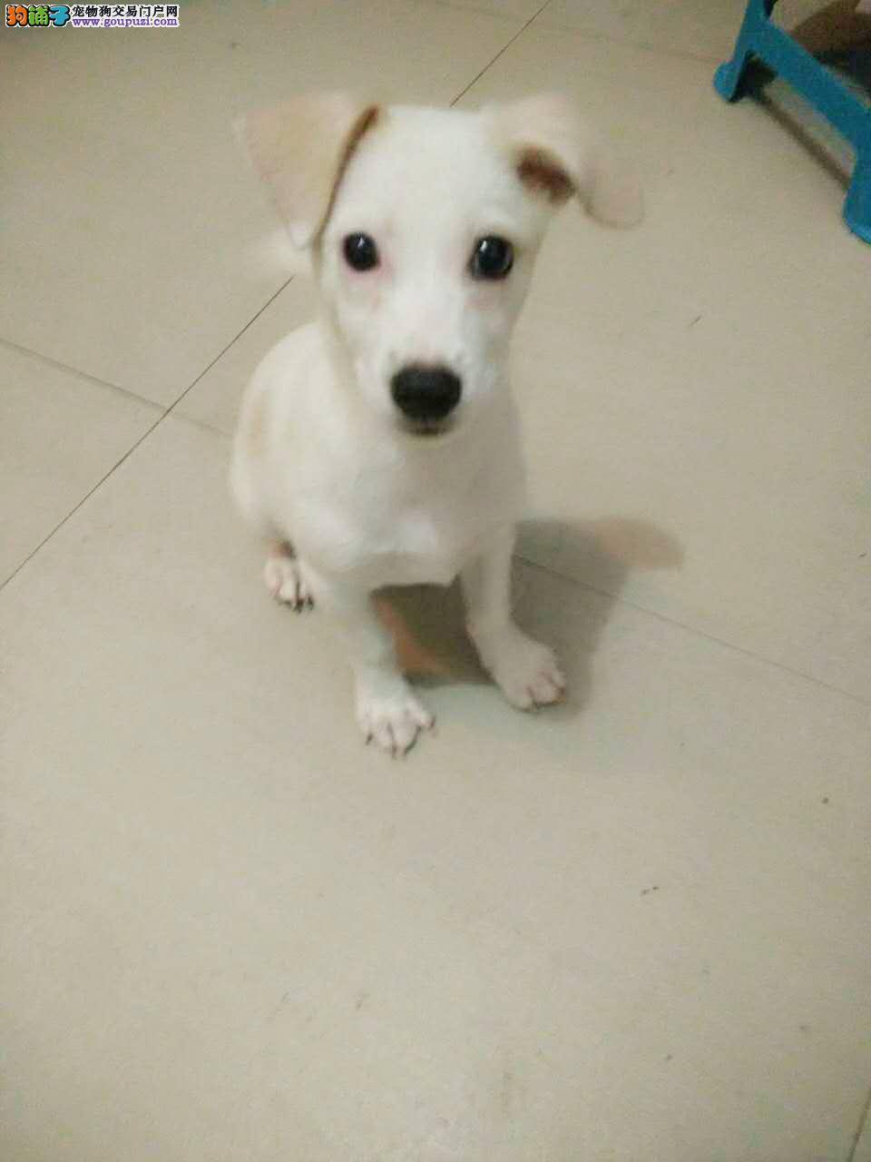 4个月的狗狗400元转卖啦,求爱心人士前来购买