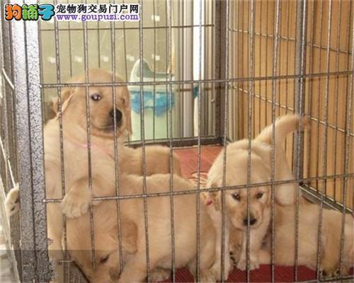 想买健康且便宜的狗狗吗?来这看看吧 自取1000