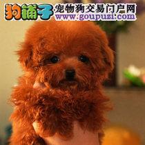 广州哪里有泰迪卖广州哪里有狗场