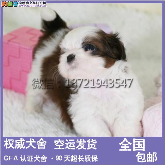 西施犬正规犬舍繁殖、诚信交易、纯种犬、可签协议