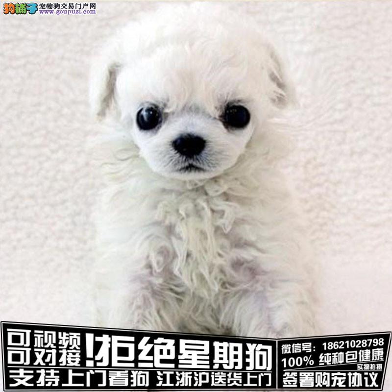 犬舍健康纯种优质出品萌宠幼犬疫苗已打驱虫已做