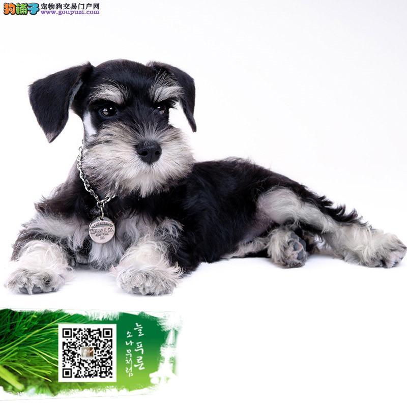 放心犬商家签署协议赠送新生犬礼包支持送上门挑选