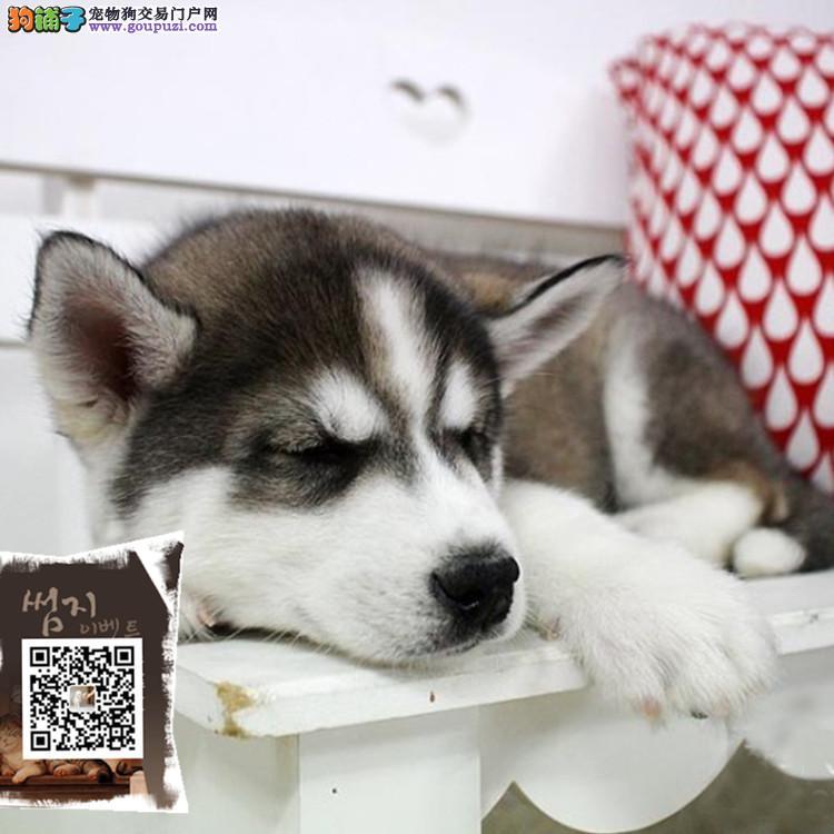 江苏狗场直销 出售纯种狗狗 包养活 签合同 送用品