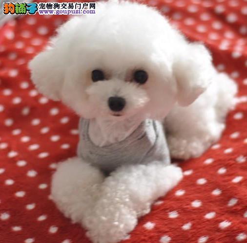 江门哪里有小型宠物买 江门哪里小型宠物狗好