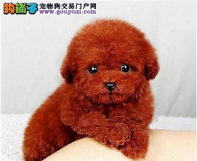 广州哪里有小型宠物卖 广州哪里小型宠物狗好