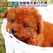 惠州哪里有小型宠物狗买/卖 惠州哪里小型宠物狗好