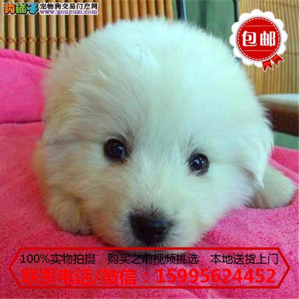 琼中县出售精品大白熊/质保一年/可签协议
