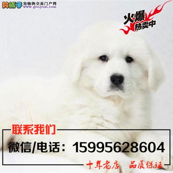 屯昌县出售精品大白熊/送货上门/质保一年