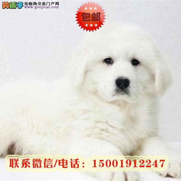 来哈尔滨市购买大白熊/信誉保障/加微信挑选