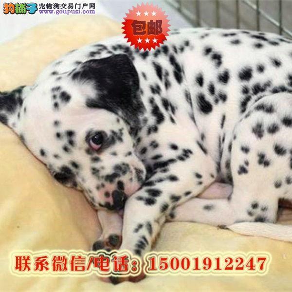 来南宁市购买斑点狗/信誉保障/加微信挑选