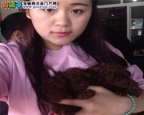 出售可爱的泰迪 可视频看狗 自取半价
