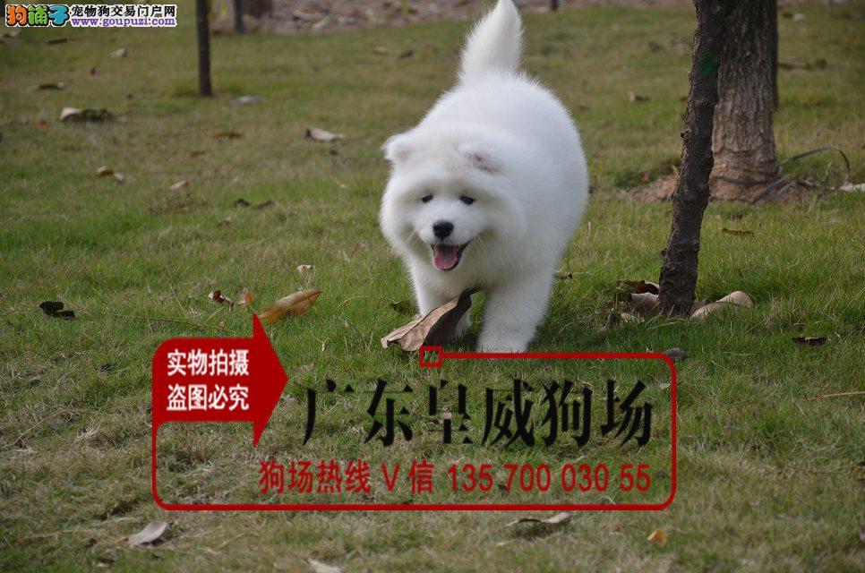 签署安全协议终身质保 出现问题随时退换 大白熊