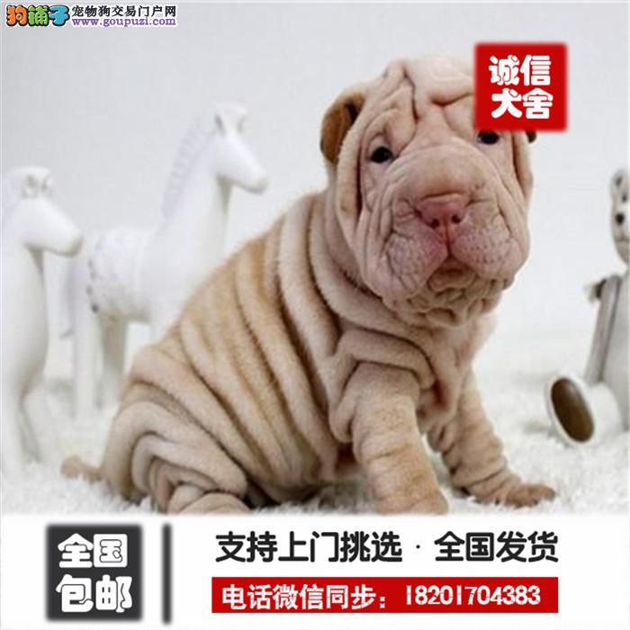 宠物狗沙皮狗 边境牧羊犬 活体幼犬 疫苗已做