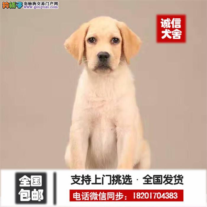 诚信交易、纯种拉布拉多健康终身保障、签协议送狗用品