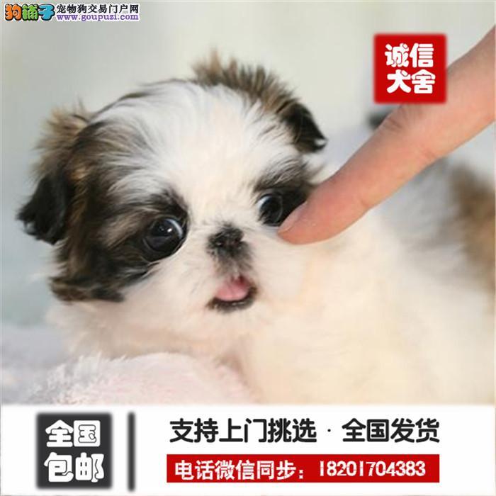 犬舍诚信出售 高品质纯种健康 各类狗狗 可送货签协议