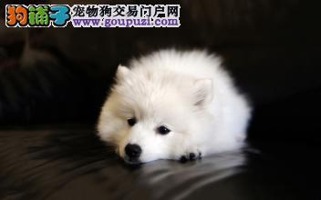 名门旺族 实体店 各种狗狗