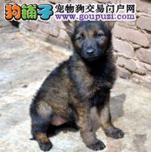 基地直销热卖诚心出售昆明犬质量三包签协议