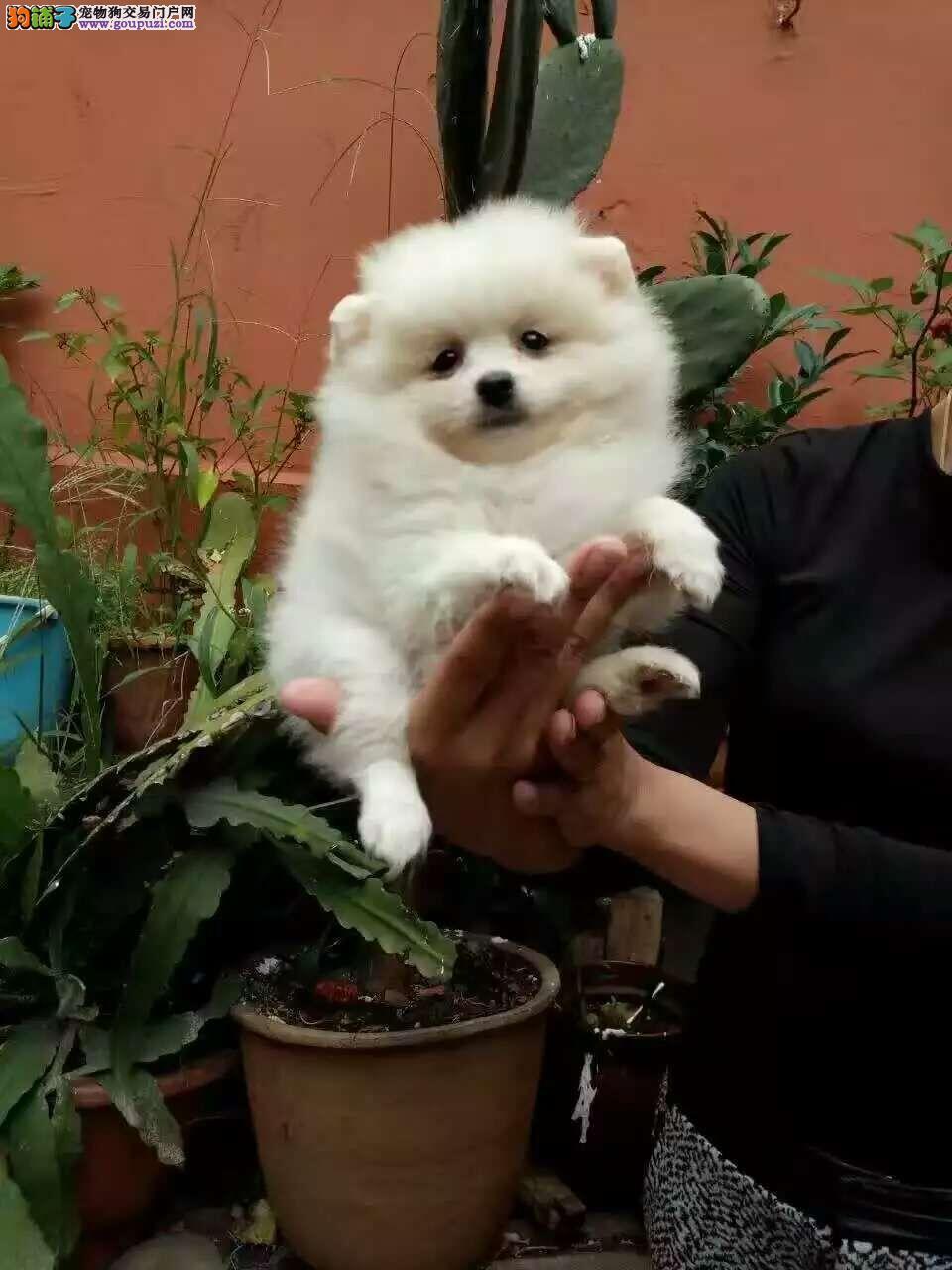 云南买狗哪个网站买狗比较好