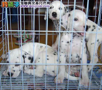红河哪些地方有宠物市场 红河买狗要去哪里买