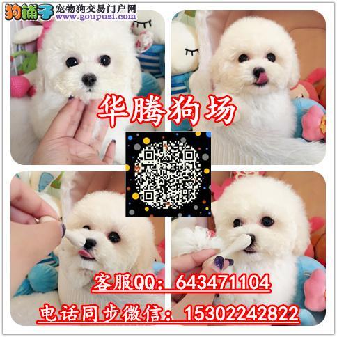 广州哪里有卖贵宾犬价格多少纯种贵宾幼犬价钱贵宾报价