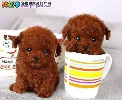 重庆狗场直销各种世界名犬 包纯种保健康