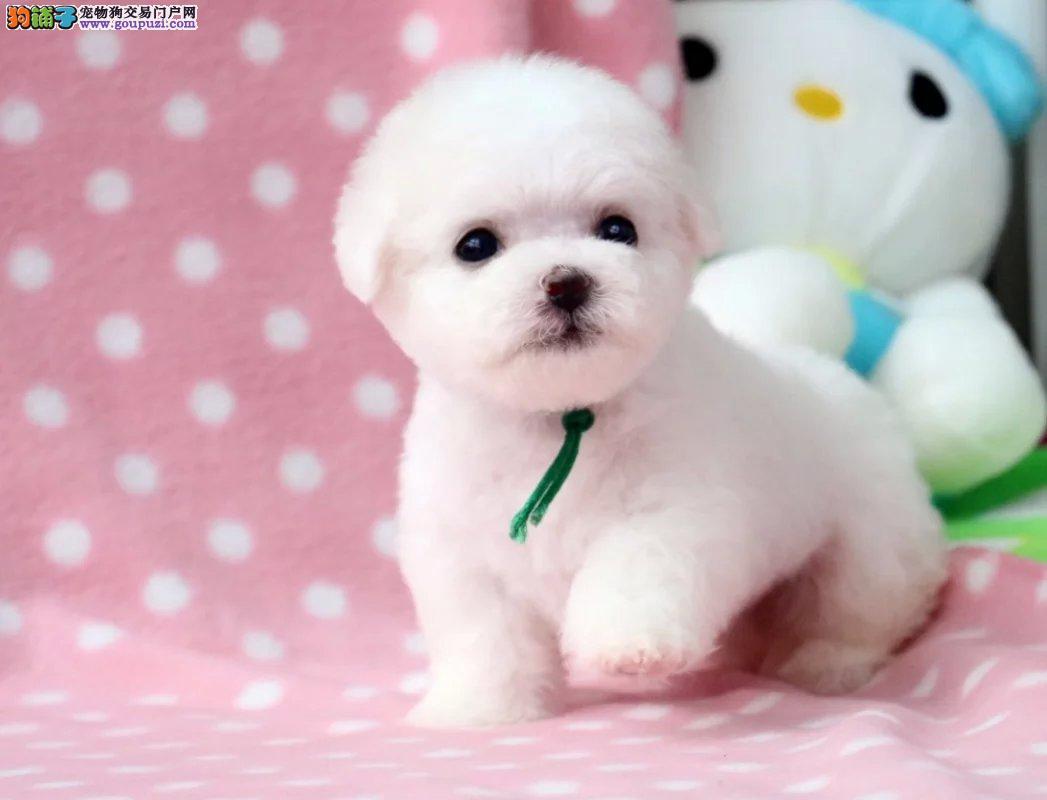 正规犬舍直销各种世界名犬 包纯种 保健康