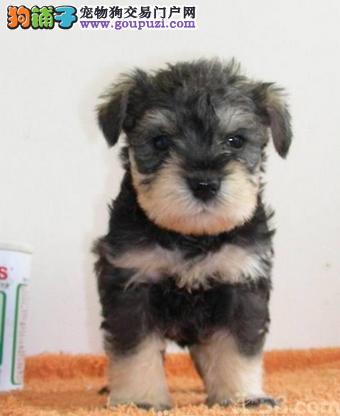 狗场直销各种世界名幼犬 包纯种健康 可以上门选购
