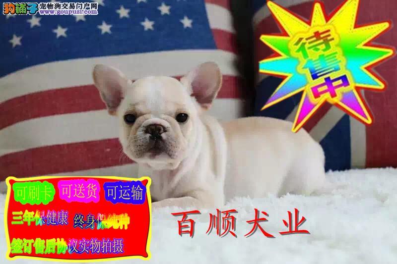 明星都超级喜欢的 法国斗牛犬,网络小红牛