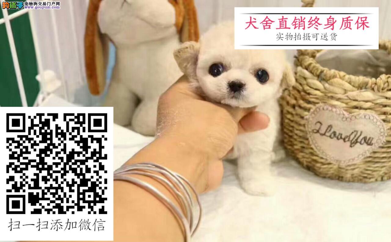 泰迪熊专卖;签购犬协议书; 发现不纯种可全额退款