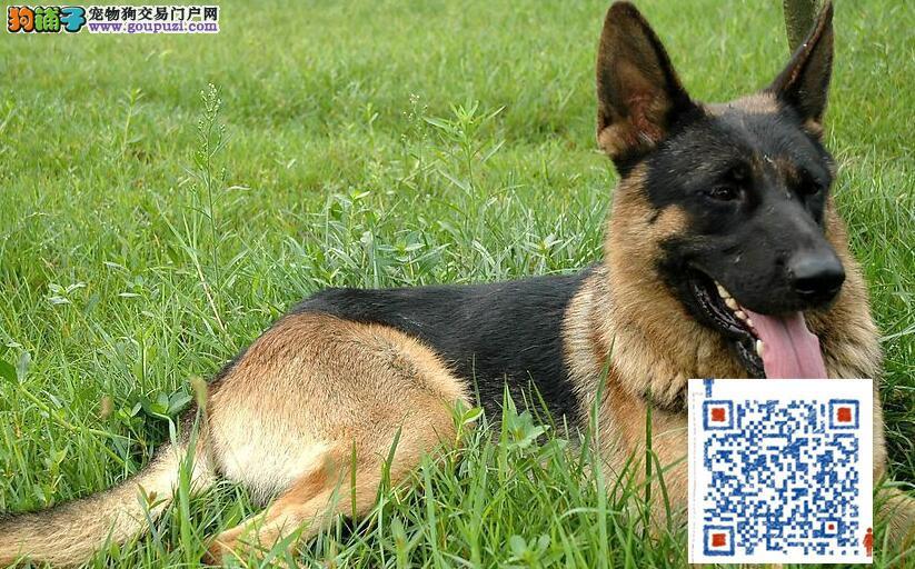 可签协议书保证,有法律效果 好狼狗中国造