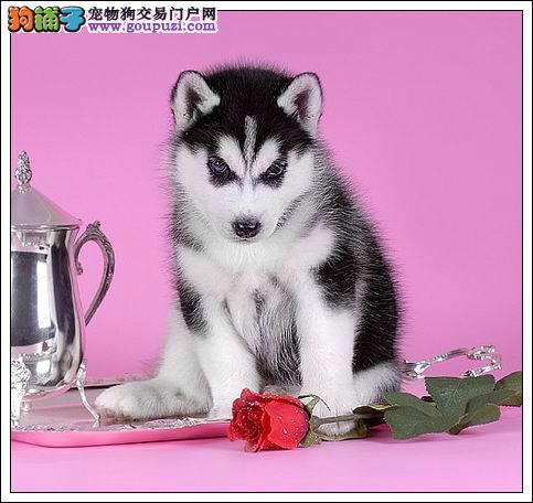 我超级喜欢的宠物狗狗我超级喜欢的宠物狗狗