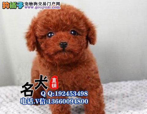 出售纯种贵宾犬,包健康可签协议。多色挑选有公母