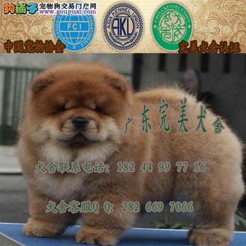 广州哪里有卖松狮狗 广州正规狗场 广州松狮狗价格多少