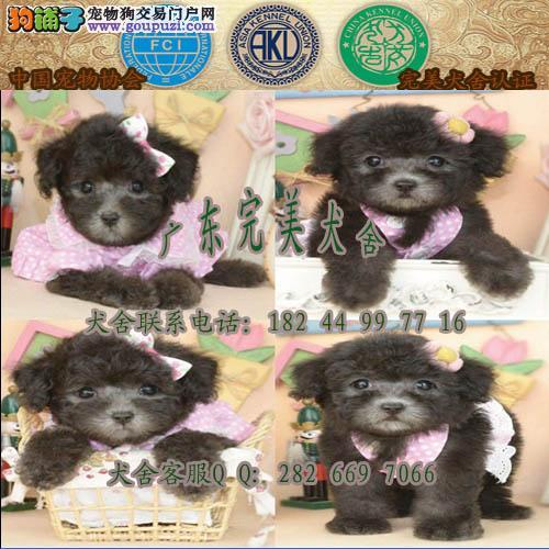 广州哪里有卖贵宾狗 广州天河贵宾一只多少钱