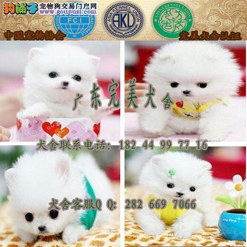 惠州哪里有狗买 惠州狗场在哪里 惠州宠物狗价格