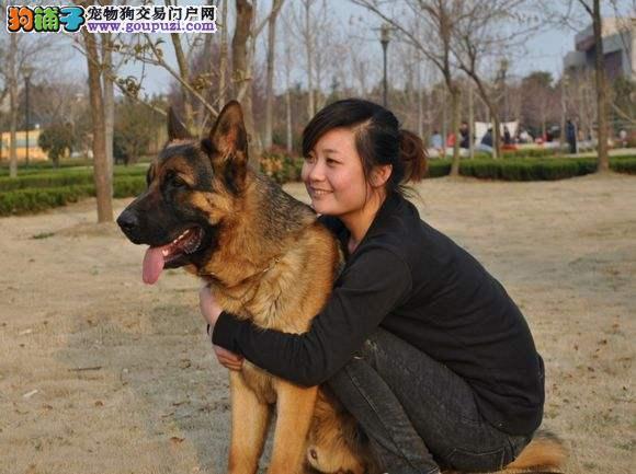 哪里卖专业基地精品纯种狼狗13182559965和各种名犬