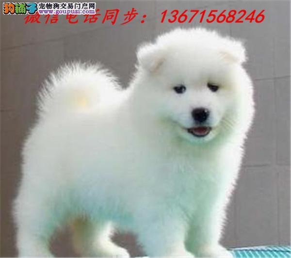 西安市专业繁殖纯种大白熊犬 健康活泼 疫苗齐全!!!