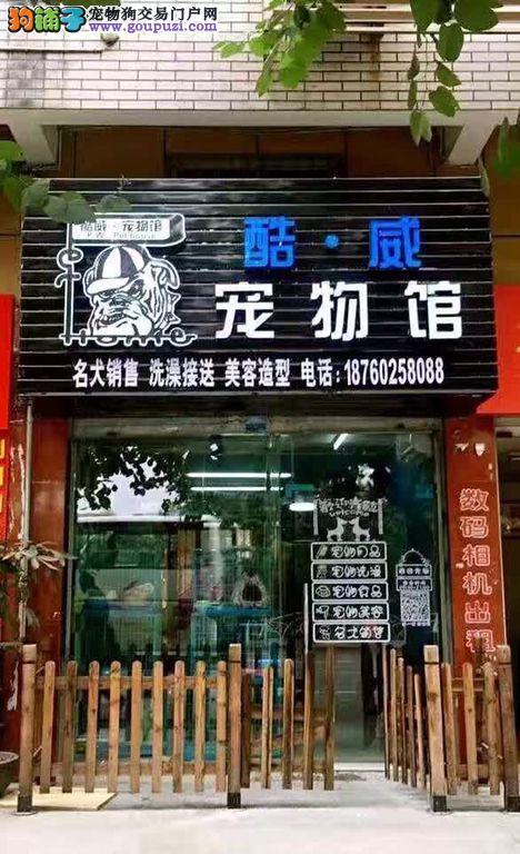 三明酷威宠物馆,出售现猫现狗!
