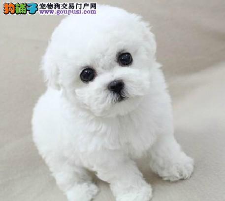 哪里卖纯种健康阿拉斯加13182559965各种名宠名犬