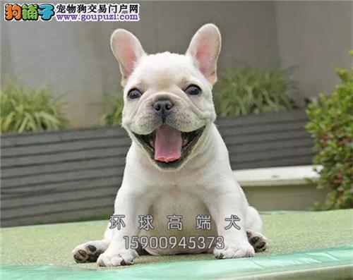 犬舍直售 法国斗牛犬 幼犬 可上门 疫苗已做!!