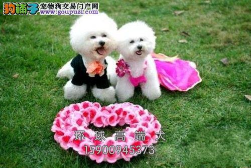 湖北比熊听话漂亮韩系幼犬送用品全国发货