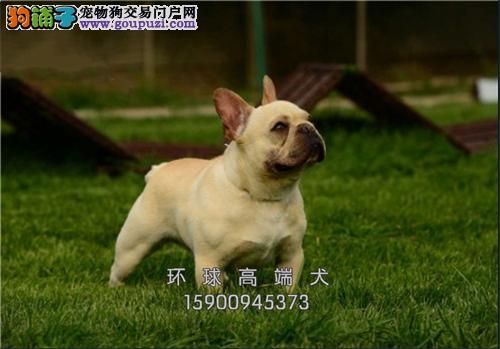 狗场出售秋田犬 可上门 疫苗驱虫已做包健康